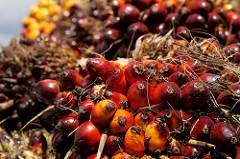 Fruits du palmier à l'huile