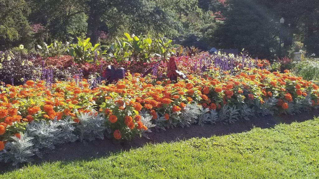Plate-bande de fleurs au Jardin